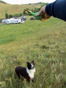 Amigo followed me up the hill hoping to get the squeaky toy