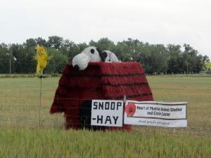 Snoop-hay
