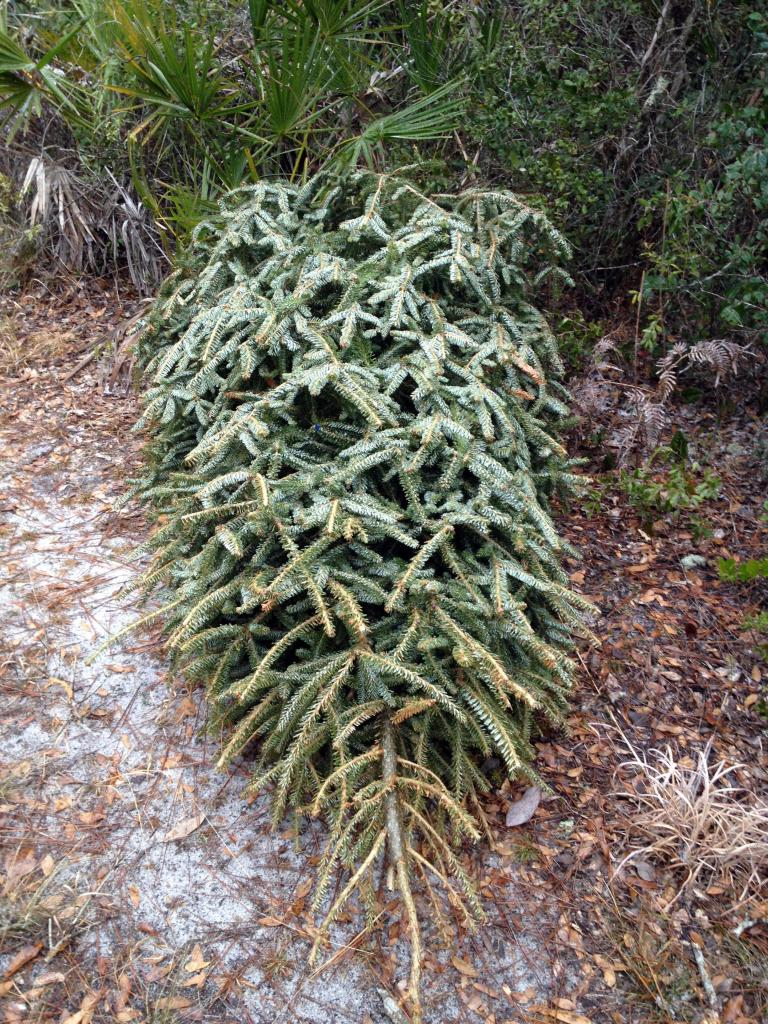 abandoned christmas tree